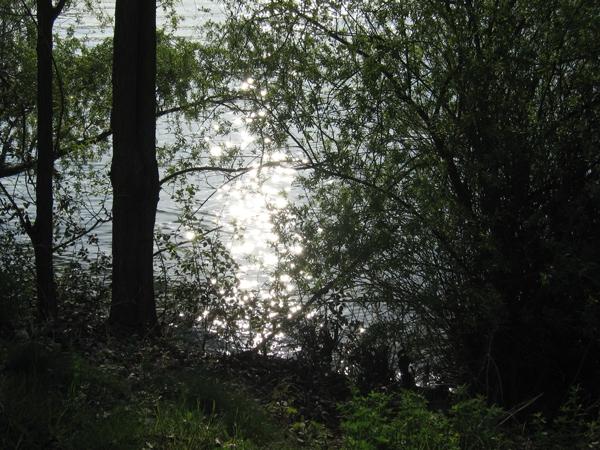 Promenade au parc de Gerland